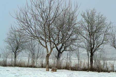 tree Stock Photo - 17537012