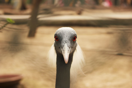 ble: Beautiful Bird With Red Eyes