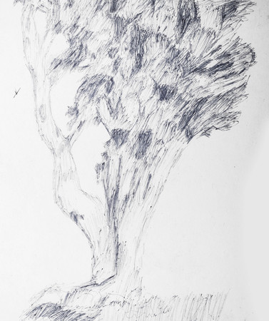 Hand Drawn Tree With Junky Line Technique On A While Paper Foto de archivo - 111657690