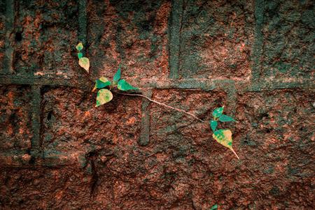 Beautiful little green plant growing in a concrete wall - Hope Foto de archivo - 121491214