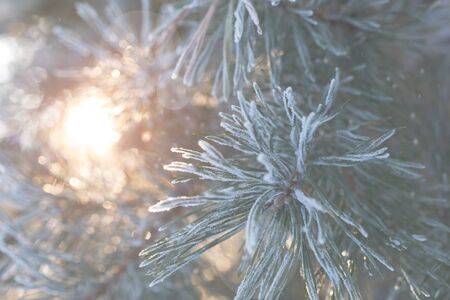 Merry Christmas and happy new year. Christmas background with fir branches covered with hoarfrost in the rays of the setting sun. Merry christmas greeting card, frame, banner. Stock Photo