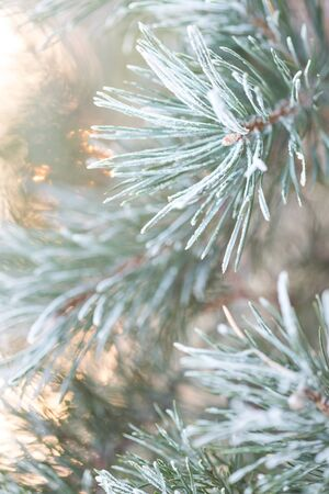 Merry Christmas and happy new year. Christmas background with fir branches covered with hoarfrost in the rays of the setting sun. Merry christmas greeting card, frame, banner. Banco de Imagens