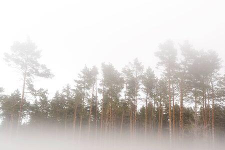 Fog in the forest, landscape on white background Banco de Imagens