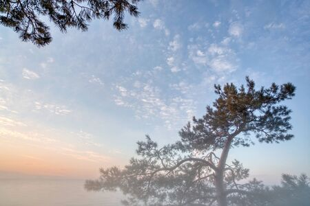 Pine tree on a background of beautiful sky and clouds. Sunset sunlight and light fog.