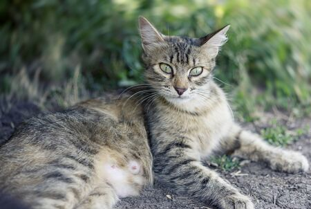 Beautiful cute cat with green eyes lies on the road.