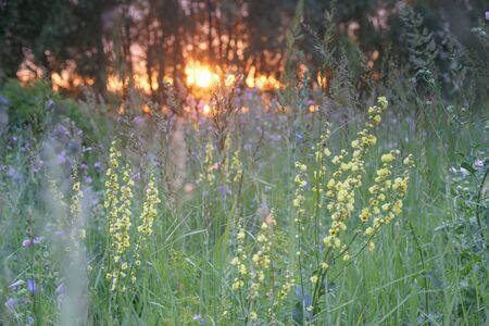 Multi-colored wildflowers and lush green grass against a beautiful sunset.