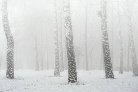 Fog in the winter forest. Lying snow. The trees are shrouded in fog. Light background. Banco de Imagens