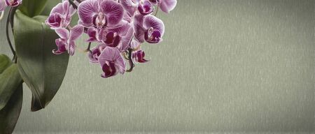 Red orchid flower on a gray textured background, space for a text, flat lay, view from above. Banner