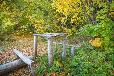 Old autumn forest with yellowed leaves. Wooden table and bench.
