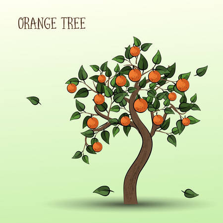 Orange tree with green leaves and fruits oranges