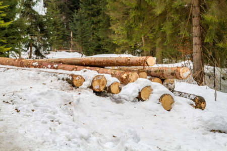 piled: Sawn logs piled on the snow in winter forest