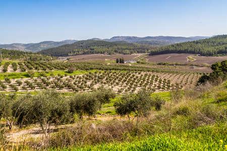 Mediterrane landschap in het voorjaar. Uitzicht vanaf de heuvel naar de olijfgaard, velden en heuvels in Israël Stockfoto