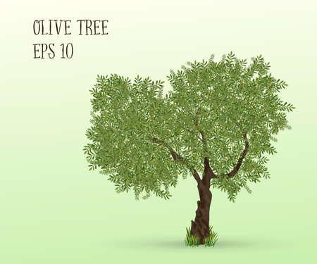 olivo arbol: Ilustración de olivo sobre un fondo verde claro. Ilustración del vector.
