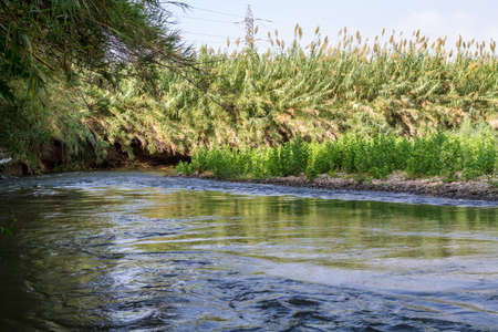 cane creek: Plants and bushes growing along the banks of the Jordan River, Israel Stock Photo