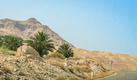 nature reserves of israel: Middle East desert landscape, palm trees at the foot of the mountain, Israel Stock Photo