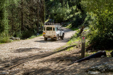shalom: SUV rides on the country road among trees in forest, Neve Shalom, Israel Editorial