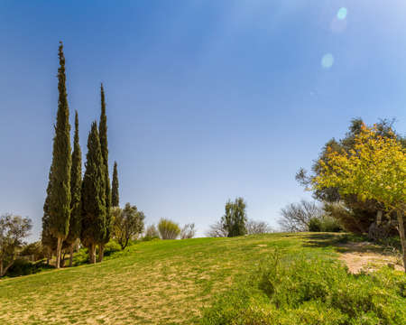 kibbutz: Cypresses on a hill in Kibbutz Sde Boker in the Negev desert, Israel