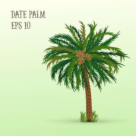 árbol de palmera datilera con las fechas de frutas maduras. Ilustración del vector EPS 10 Ilustración de vector