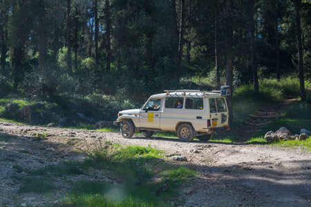 shalom: SUV rides on the country road among trees in forest, Neve Shalom, Israel Stock Photo