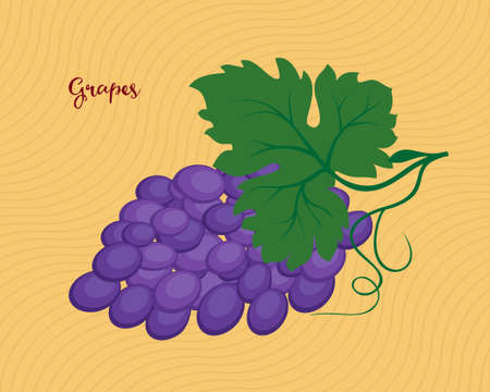 purple grapes: Bunch of purple grapes with leaves. Raster illustration Stock Photo