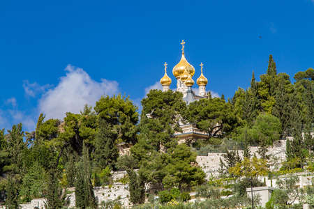 mount of olives: Golden domes of Russian Orthodox Church of St. Mary Magdalene on the Mount of Olives in Jerusalem