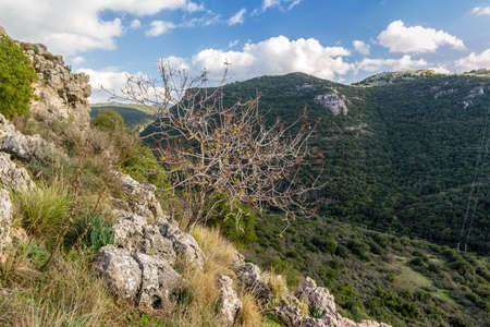 nahal: Mountain landscape, view of the mountainous area of Upper Galilee in Israel Stock Photo