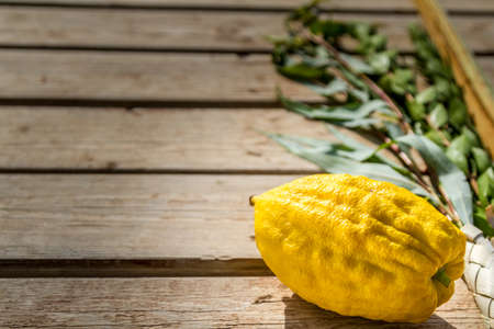arava: Four species: etrog, lulav, hadas and aravah, symbols for Jewish holiday Sukkot