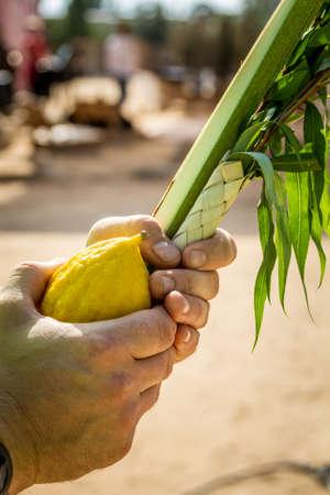 judaic: Four species: etrog, lulav, hadas and aravah, symbols for Jewish holiday Sukkot