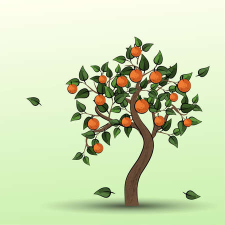Orange tree with green leaves and fruits oranges. Raster illustration