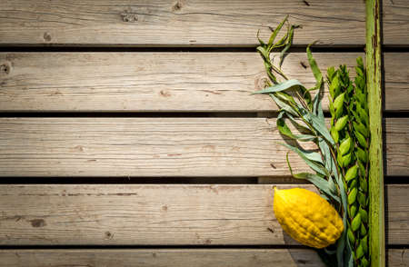 Four species: etrog, lulav, hadas and aravah, symbols for Jewish holiday Sukkot