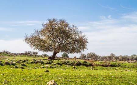 The tree is growing on a green meadow between boulders