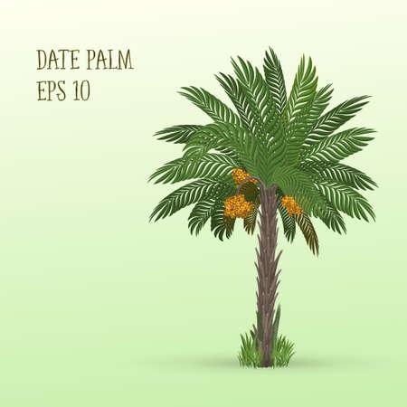 Illustration vectorielle de dattier palmier avec des dates de fruits mûrs sur fond vert clair