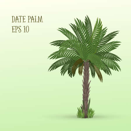 date palm: Vector illustration of Date palm tree on light green background Illustration