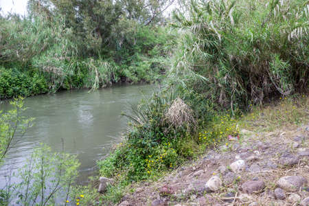 rushy: The Jordan River, the bushes growing along the banks of the river, Israel