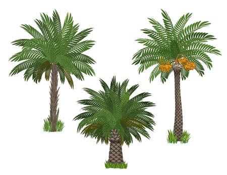 Palmbomen set Stockfoto