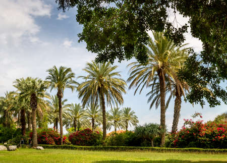 Palm Park of the Church Of The Beatitudes where Jesus preached the Sermon on the Mount.