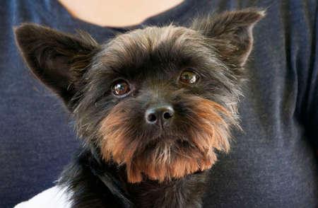 face to face: dog face Stock Photo