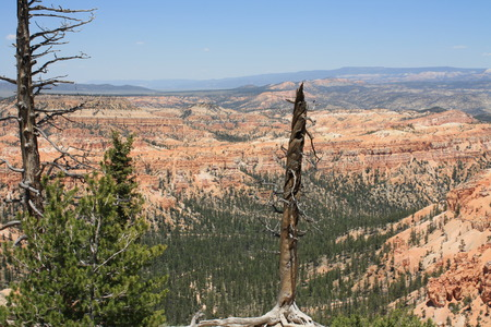 View of the Bryce canyon Stock Photo