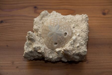 details on a stone with a fossil cochlea
