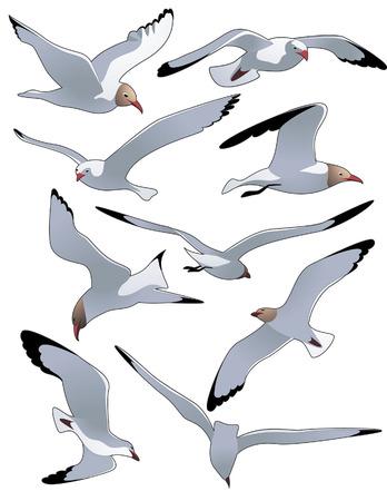 deslizamiento: Mar gaviotas, ilustraci�n vectorial, el archivo EPS incluido  Vectores