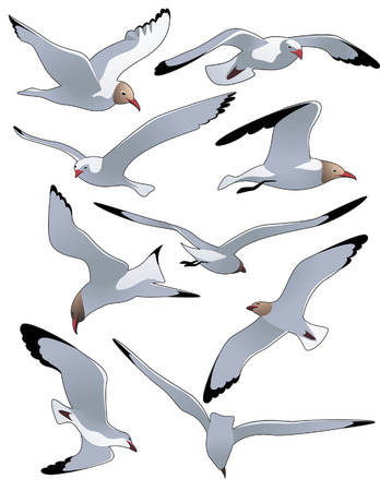 bird view: Sea gulls, vector illustration, file included