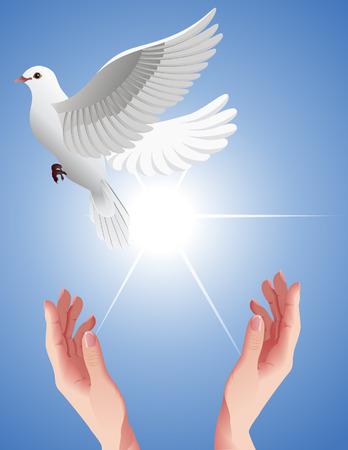 pigeons flying: Humanos manos libres establecimiento paloma blanca, ilustraci�n vectorial, archivo EPS incluido  Vectores