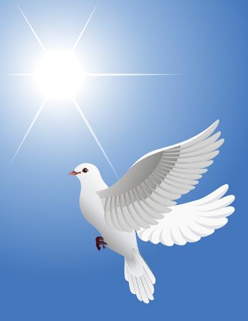 White dove, vector illustration, EPS file included