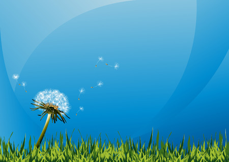 Dandelions on summer field, vector illustration, EPS file included Illustration