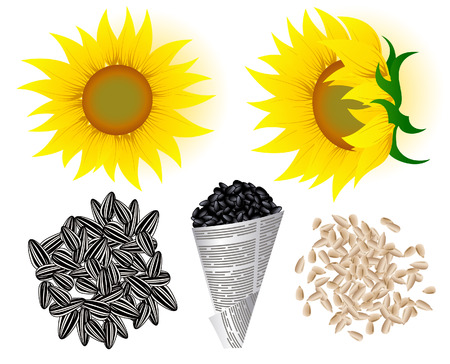 Sunflowers and seed, vector illustration, file included Stock Vector - 4266737