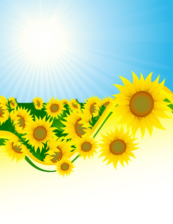 Sunflower background, vector illustration, file included Vector