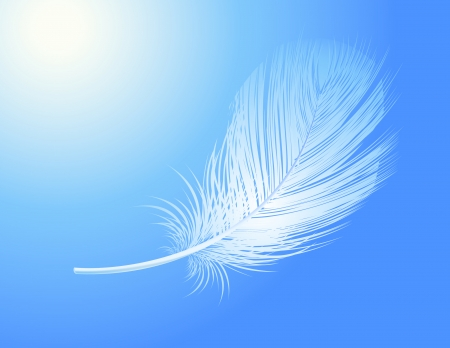feather vector: Feather, vector illustration, file included Illustration