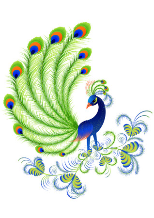 plumes: Peacock, vector illustration, file included