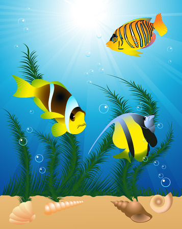 shell fish: Exotic fish under water, vector illustartion, file included Illustration