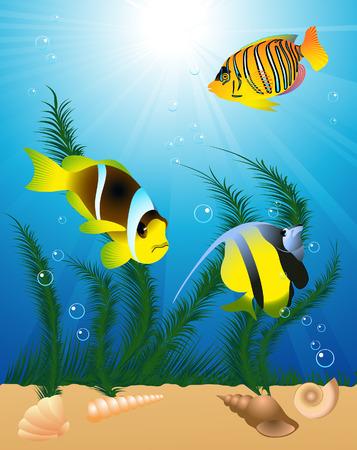 algas marinas: Peces ex�ticos en el agua, illustartion vectorial, archivo EPS incluido